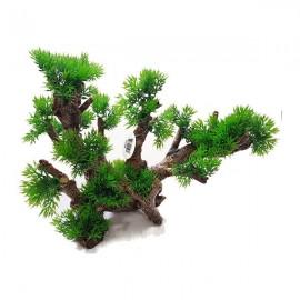 Medium Creeping Tree