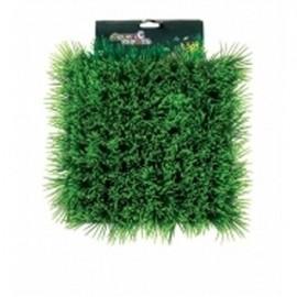 Betta Dwarf Hairgrass Mat 25 x 25cm